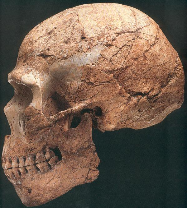 Archaic humans - Wikipedia
